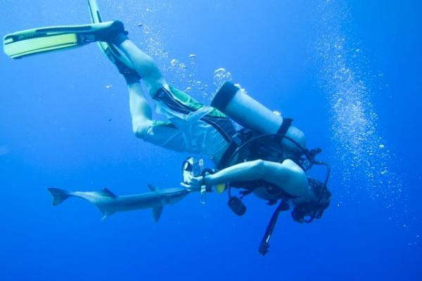 A diver gets a love bite from a remora