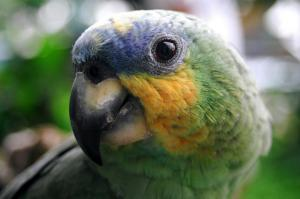 A beautiful and friendly parrot.