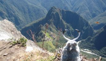 Jackie Lope in her Machu Picchu nest.