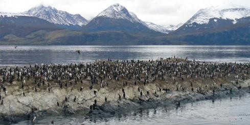 Cormorants along the shore