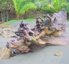 Interesting wood formation seen during Costa Rica beach vacation