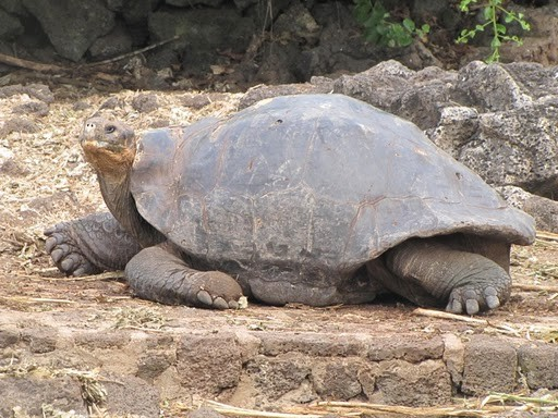 Wildlife of the Galapagos archipelago