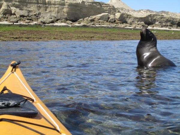 Observe sea lions and elephant seals up close while kayaking around the Peninsula Valdes