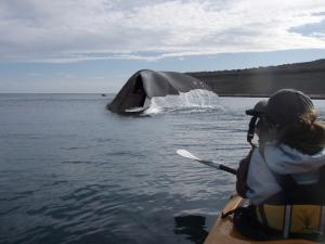 Spotting a whale off the coast of the Valdes Peninsula