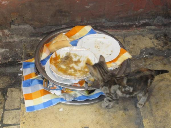 Stray cats were abundant in Istanbul.