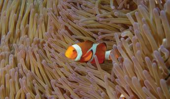 Clownfish spotted on snorkeling trip