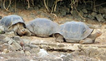 Wildlife of the Galapagos Islands