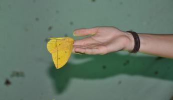 One of the wonderful large moths that visited our group!
