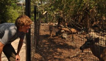 The Belize Zoo is a great side trip on your way to or from Belize City!
