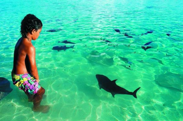 Experience the abundant marine life in the South Pacific