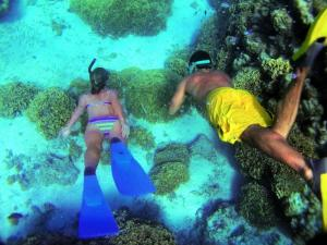 Snorkel with brilliant marine life