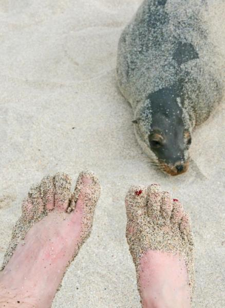 Of seals and sand
