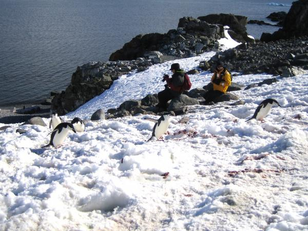 Travelers among penguins during Antarctica tour
