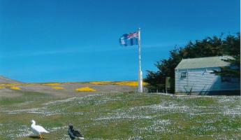 Falkland Islands flag and Kelp Geese at West Point Island