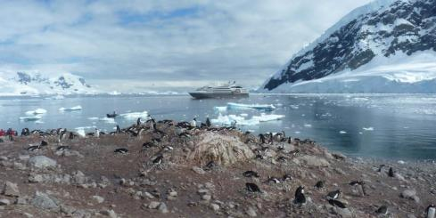 Small Gentoo Penguin rookery at  Neko Harbour, Antarctica