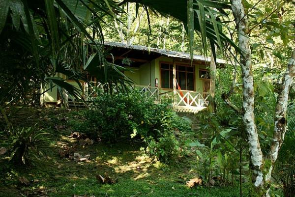 Set on the banks of the Napo River, listen to the sounds of the jungle from your cabin