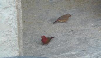 Birds in Joal
