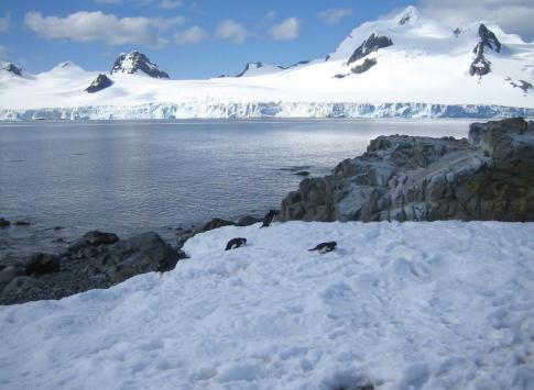 Penguins along coast during Antarctic trip