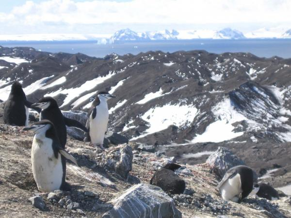 Observing penguins in the hills along Antarctic Peninsula