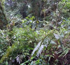 Its a jungle out there!  Tapanti National Forest trailside.