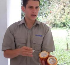 Marco explaining Caoco beans (that\'s chocolate!)
