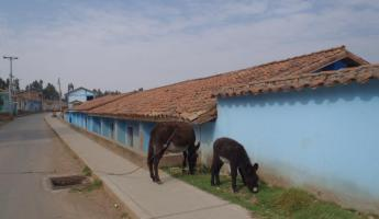 Donkeys on the abandoned streets of Chinchero
