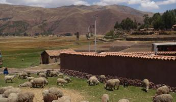 Sheep pasture outside the ruins of Raqchi