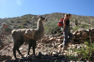 Trekking with Llamas on the Salta Multisport