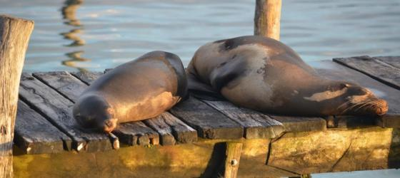 Sea lions napping on a dock in the Galapagos