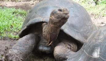 Wildlife trip in the Galapagos