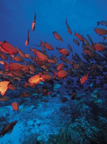 View an abundance of marine life