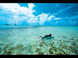 Snorkle amid stunning coral gardens