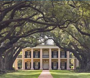 Stroll the oak-lined paths of Oak Alley Plantation