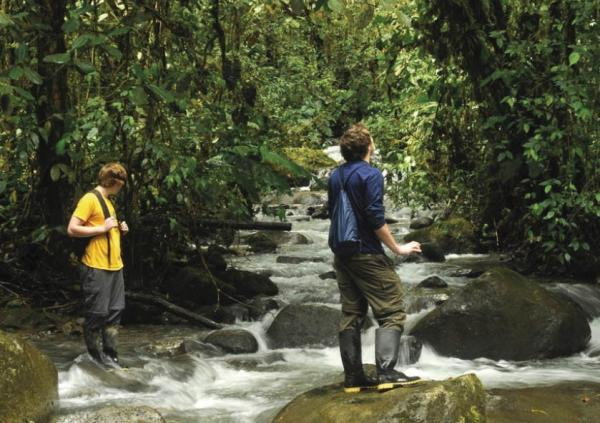Explore the realm of the rainforest with expert naturalists