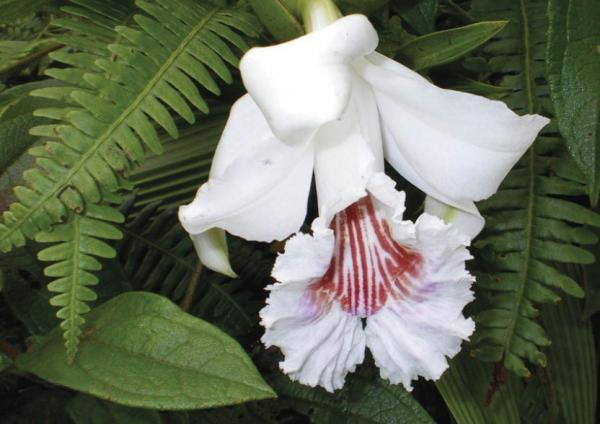 Ecuador is home to more than 4,000 known orchid species, more than any other country in the world