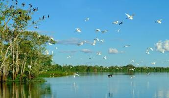 Birds in the Amazon