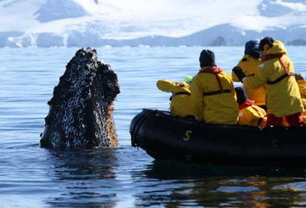 Unforgettable experiences on your Antarctic cruise