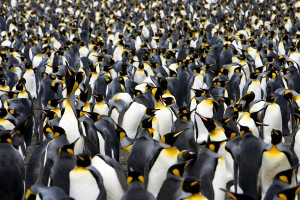 Explore penguin rookeries