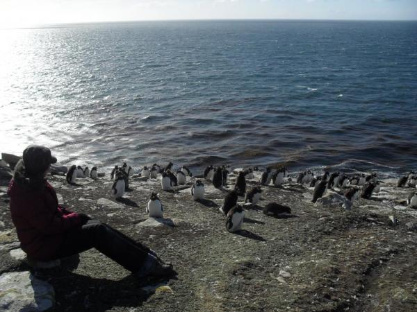 Watching the penguin colony