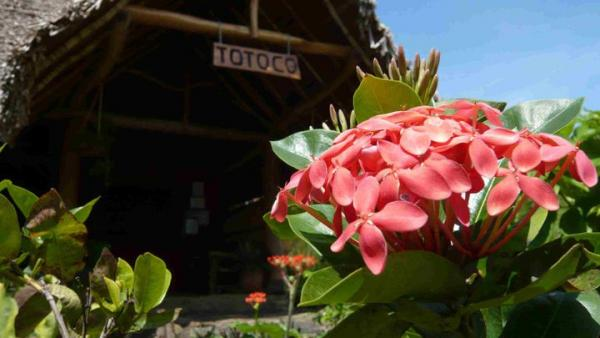 Welcome to Totoco Ecolodge