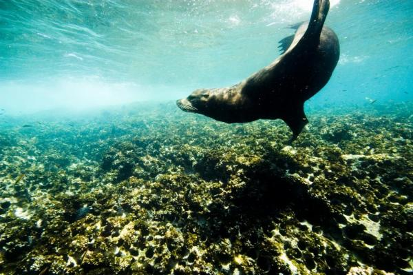 Snorkel with sea lions in Baja