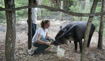 Feeding the tapirs at the zoo