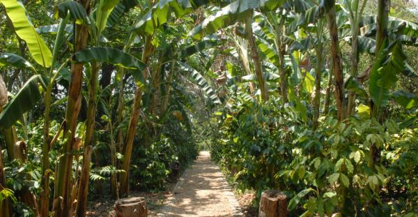 Explore the gardens and tropical trails