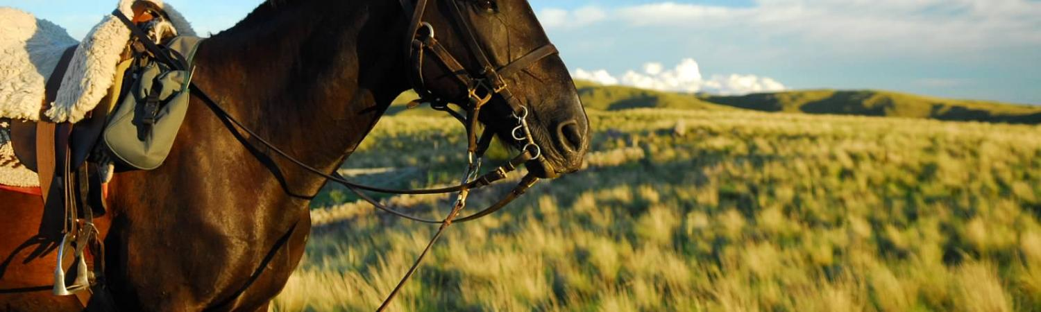 Explore Argentina by horseback during a stay at Estancia Los Potreros