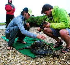 Sea turtle monitoring