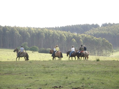 Enjoy horseback excursions on the property