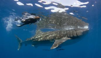 Eye-to-eye with a whale shark