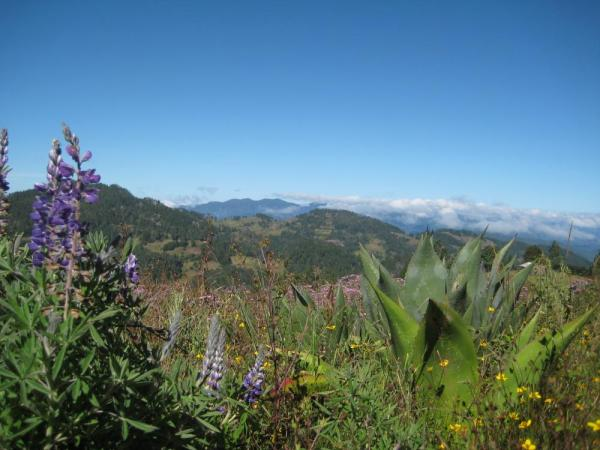 Miles of scenic trails explore the thickly forested highlands north of the Valle de Tlacolula