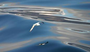 A seagull flies above the glassy water of Dundas Harbor
