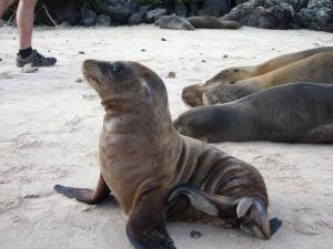 Explore the Galapagos